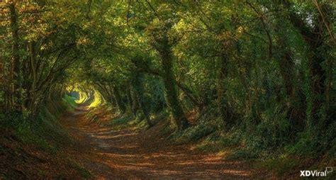 por una gentil floresta 8426374646 los mejores bosques del mundo beevoz