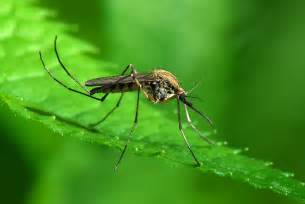 Mosquito Backyard Control Mosquito Squad Of Greater Birmingham Birmingham S 1