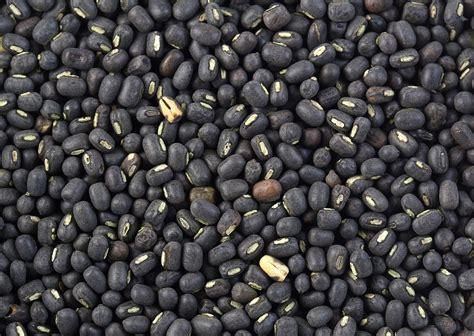 Planter Bag 5 Liter Hitam T1310 2 file black gram jpg