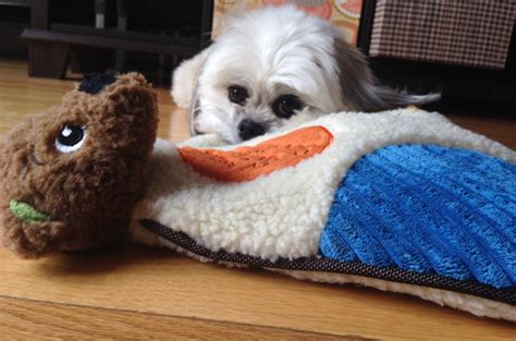 comfort toys for puppies scents of security comfort toy is a security blanket for