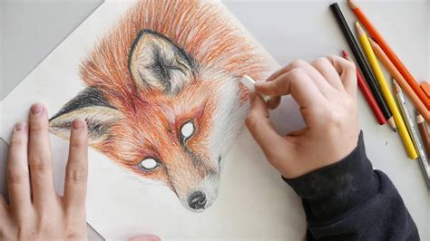 cool colored pencil drawings fox colored pencil drawing