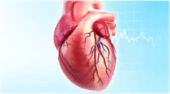 Today heart news amazing facts about your heart feb 28 2016