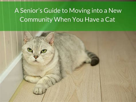 moving cat to new home 28 images a senior s guide to