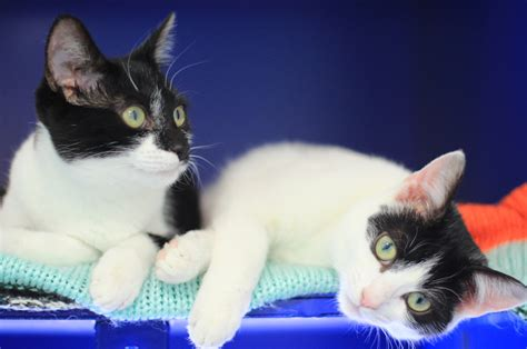 how to rehome a how to rehome a cat battersea dogs cats home