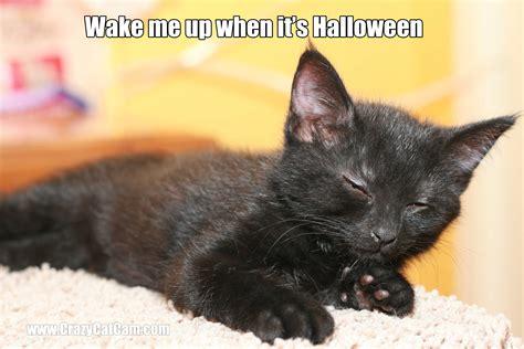 Halloween Cat Meme - halloween cat memes festival collections