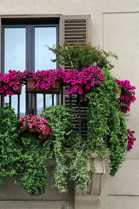 Window And Balcony Flower Box Ideas Photos Best Flowers On Flowers For Balcony Garden