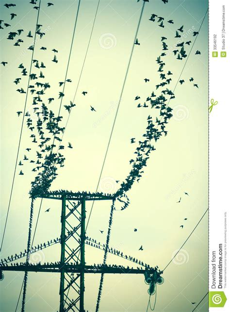 flock  birds  power lines stock photography image