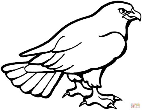 hawk coloring pages hawk 3 coloring page free printable coloring pages