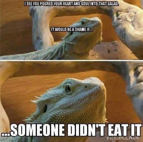 Bearded Dragon Meme - 11 best l g memes images on pinterest ha ha leopard geckos and funny stuff