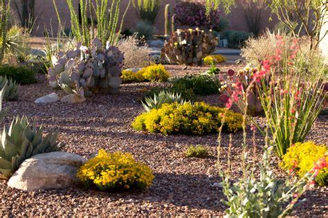 backyard desert landscape designs desert landscaping