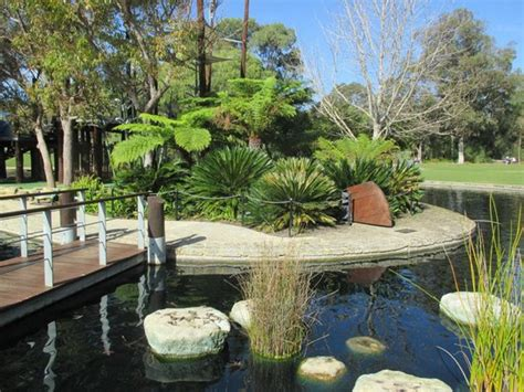 Botanical Garden Perth Boab Tree Picture Of Park Botanic Garden Perth Tripadvisor
