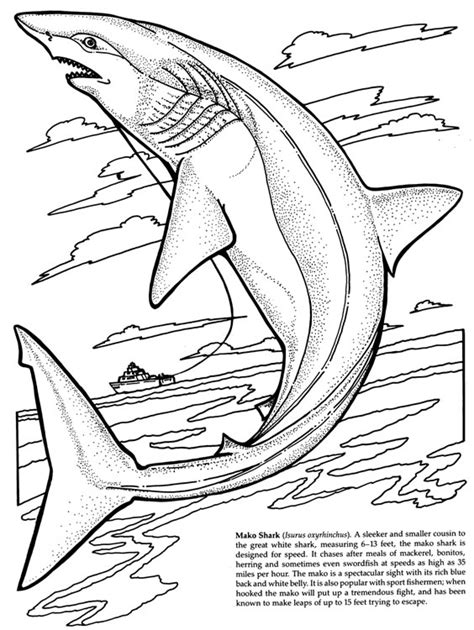 megamouth shark coloring page free coloring pages of megamouth shark 9386