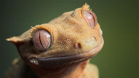 imagenes ojos de reptiles fondos de reptiles fondoswiki com
