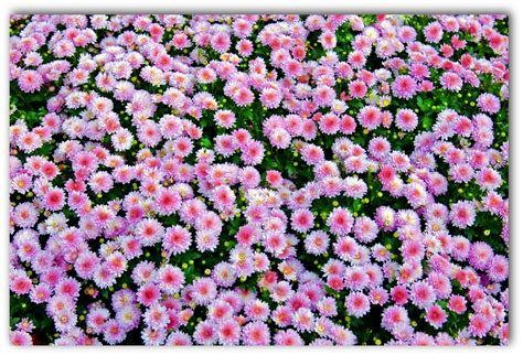 Flowers Patches by Flower Patch Images