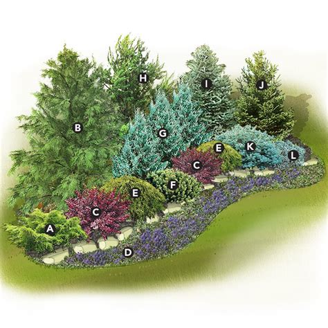 Landscape Design Zone 4 Evergreen Screen Landscape Plan