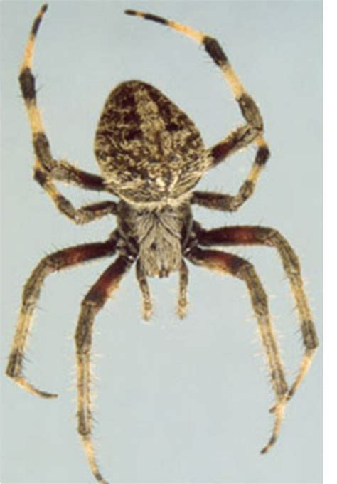 Garden Spider New York 17 New York Spiders That Will Make Your Skin Crawl