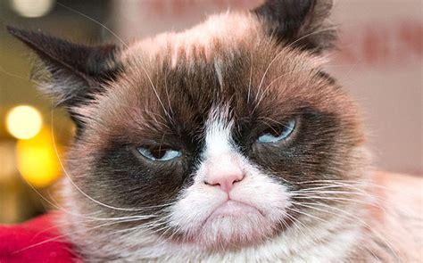 grumpy cat grumpy cat free large images