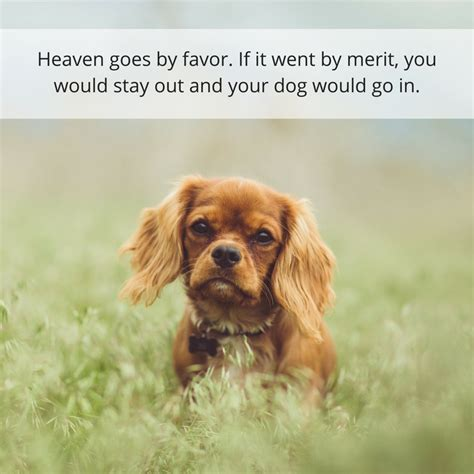 do all dogs go to heaven grieving the loss of your pet books 30 powerful quotes about losing a dealing with grief