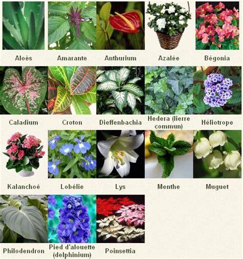 Liste Des Plantes Toxiques Pour Les Poules by Les Plantes Toxiques Pour Les Animaux