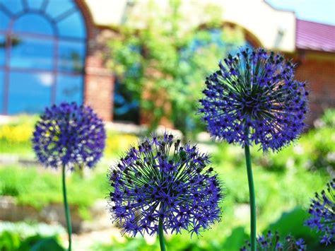 Garden Waverly Ia by Wpl Butterfly Gardens Waverly Iowa