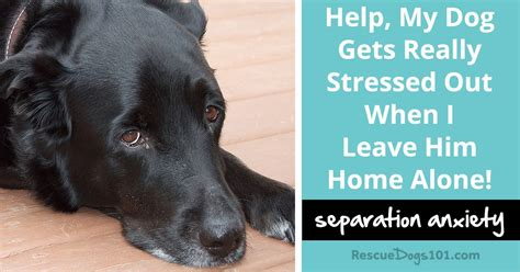 puppy separation anxiety solutions solutions for separation anxiety rescue dogs 101