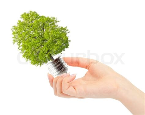 what tree holds lights better holds green tree in light bulb alternative energy concept stock photo colourbox