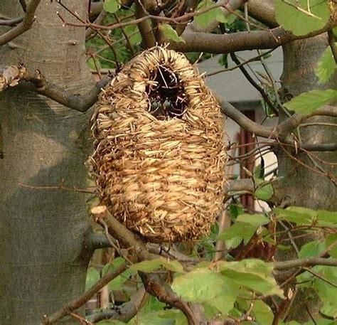nest boxes for garden birds made in the uk
