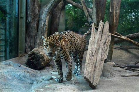 Loved The Jaguar Picture Of Mesker Park Zoo Botanic Mesker Park Zoo Botanic Garden