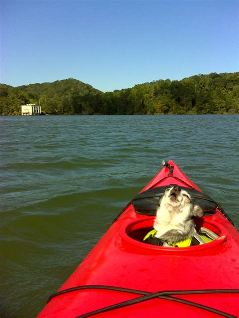 kayak for dogs chihuahua s to kayak i this picture i used