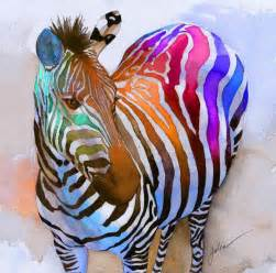 colorful zebra cool zebra pictures animal