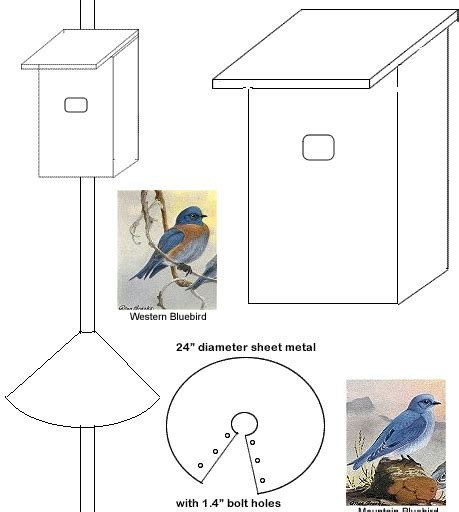 file house sparrow bird house plans