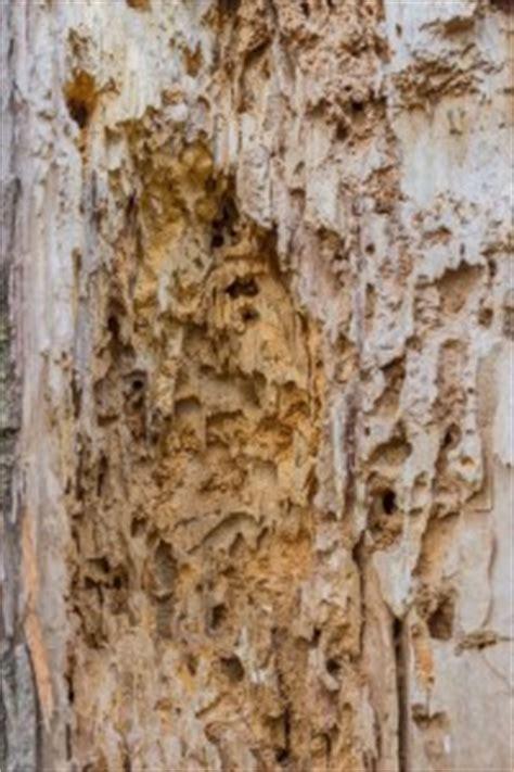 rid  carpenter ants tomlinson bomberger