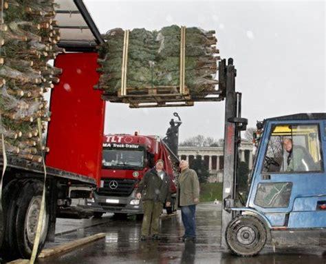 christbaum wolf m 252 nchen weihnachtsbaum kaufen
