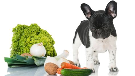 can dogs eat squash 6 vegetables dogs can eat according to science