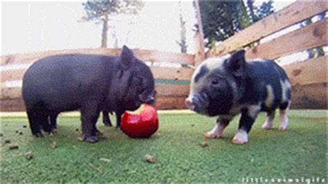 apple eating gif find & share on giphy