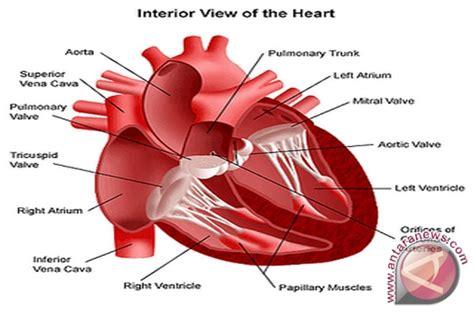 konsumsi garam berlebih awas serangan jantung antara news lung