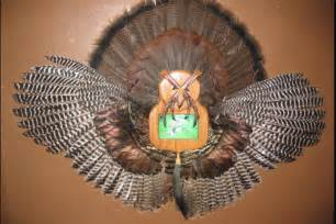 Turkey Fan Mount Template by 1000 Images About Cool Mounts Taxidermy On