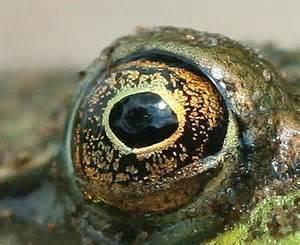 Frog eye image page