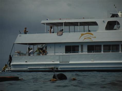hoku boats our boat picture of dolphin star hoku nai a waianae