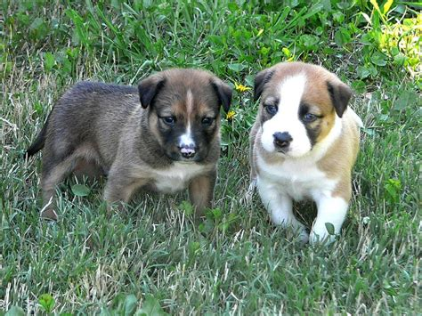 socializing puppies how to safely socialize puppies before getting all their
