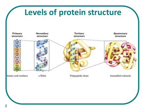 3 proteins in the b sc biochem ii biomolecule i u 3 1 structure of proteins