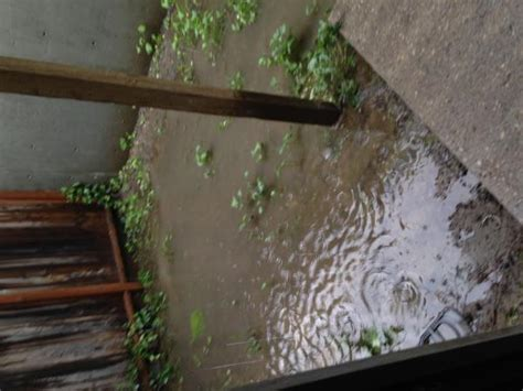 backyard flooding drainage issues as well as landscaping