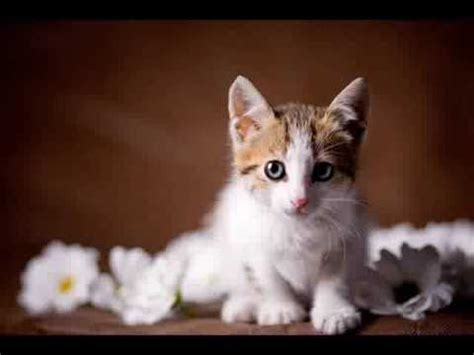 how to get rid of urine smell in carpet how to get rid of cat urine smell design bild