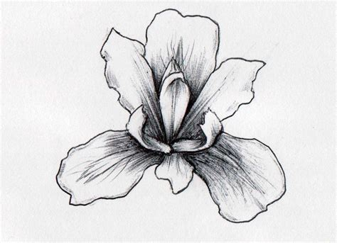 iris flower tattoo designs 20 black and white iris designs