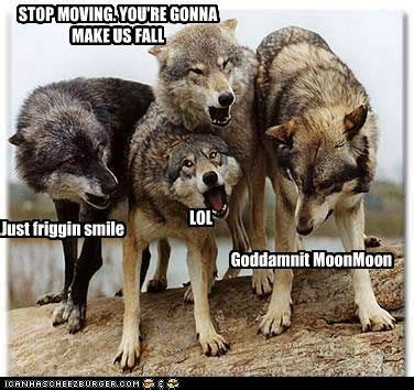 Wolf Pack Meme - moon moon the wolf meme moon moon pinterest wolf