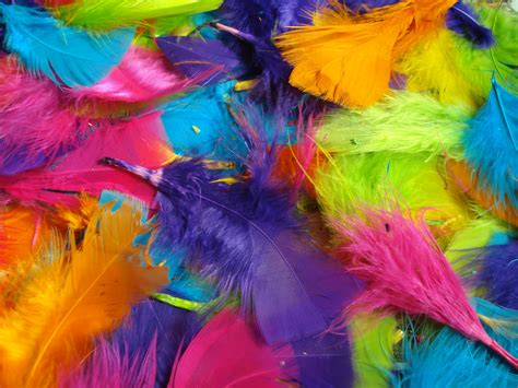 colorful pictures bright colored feathers
