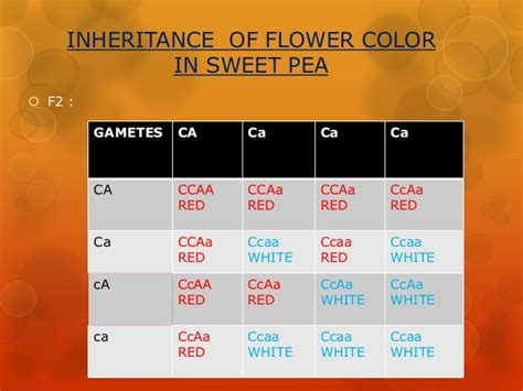 supplementary colors supplementary and complementary inheritances