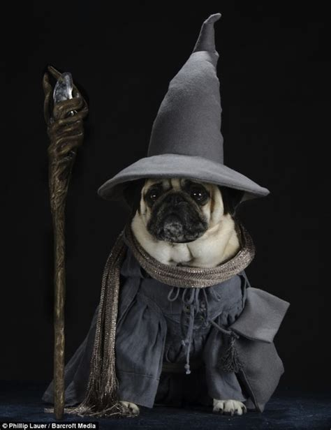 pugs of middle earth adorable pictures of pugs dressed up as lord of the rings characters