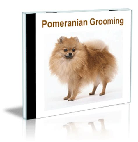 pomeranian clipping grooming home study pet grooming school