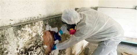 mold inspection raleigh mold inspection raleigh mold removal mold remediation